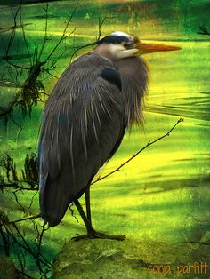 Heron | Flickr - Photo Sharing!
