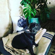 En Casa Telmo con Brutus