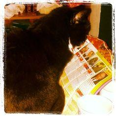 I like to start my day with a cup of tea and a read of the TV magazine #cats #catsofinstagram
