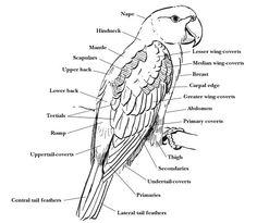 Swartzentrover.com | External Anatomy of a Bird | Seabirds ...