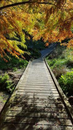 Forest of Memory, Pukeora Hill