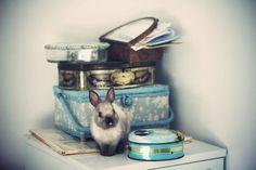i have a creepy obsession with baby bunnies Hunny Bunny, Baby Bunnies, Hello Cute, Netherland Dwarf, Jack Rabbit, Cutest Thing Ever, Hare, Aqua Blue, Animal Kingdom