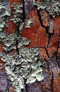Lichen On Tree Bark Art Print by John Foxx