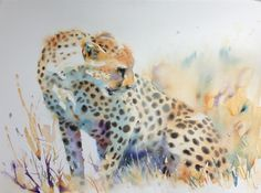 Poised to Pounce - Cheetah watercolor by Hazel Soan