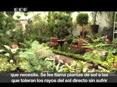 Para cada tipo de plantas, un cuidado distinto [Revista del Consumidor TV 37.1] - YouTube