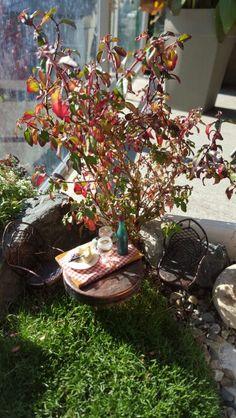 Fall colours in mini garden