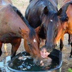 You can almost see the horses smiling!