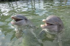 Dolphins in the Florida Keys