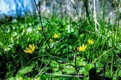 Napfűrdőzés...Long-erdő természetvédelmi terület,Sárospatak környékén... Album, Spring, Flowers, Plants, Florals, Planters, Flower, Blossoms, Plant