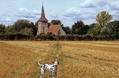 the dalmatian  and path that leads across the fields to St Nicholas's Church, in Otham, Kent