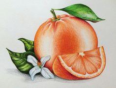 Orange, Illustration, foodillustration, pencils, pencil drawing, Buntstiftzeichnung, иллюстрация, апельсины, апельсин, рисунок, цветные карандаши