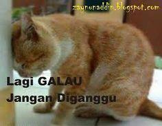 Koleksi Gambar Kucing Galau - http://asaljadi.com/koleksi-gambar-kucing-galau/