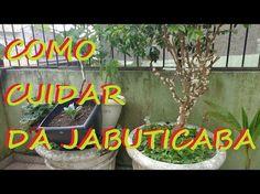 Como cuidar da jabuticaba para produzir muitos frutos! - YouTube