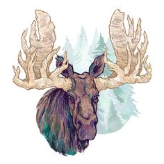 Moose. #illustration #moose #canadian #nature