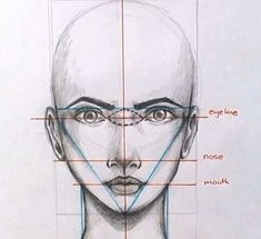 face drawing proportions: