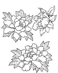 Amazing Black Outline Peony Flowers Tattoo Design