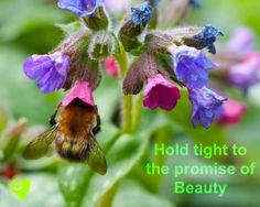 Garden wisdom from Mana Gardens Garden Quotes, Sense Of Place, Gardens, Plants, Wisdom, Animals, Inspirational, Image, Beauty