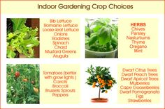 Image from http://www.family-survival-planning.com/image-files/indoor-crops.jpg.