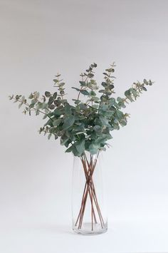 eucalyptus for both scent and aesthetic Dried Eucalyptus, Eucalyptus Bouquet, Eucalyptus Centerpiece, Vases Decor, Plant Decor, Bouquet D'eucalyptus, Wedding Bouquet, Matilda, Decoration Plante
