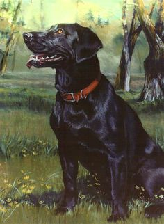 Labrador Retriever  Jean Hildebrant Painting