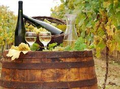 Vineyards and wine tastings
