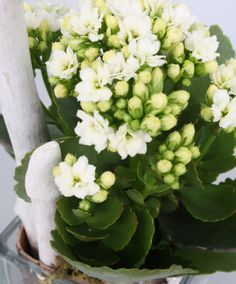 Arrangement White Breeze Beautiful Natural Indoor Plant So Easy To Compose