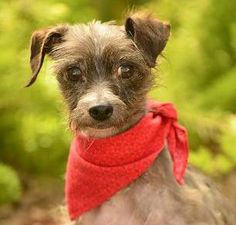 Shelter Dogs, Rescue Dogs, Animal Rescue, Cute Baby Animals, Animals And Pets, Doggies, Dogs And Puppies, Terrier Mix Dogs, Animal Projects
