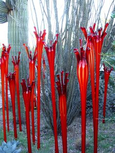 Chihuly in the Phoenix Desert Botanical Garden