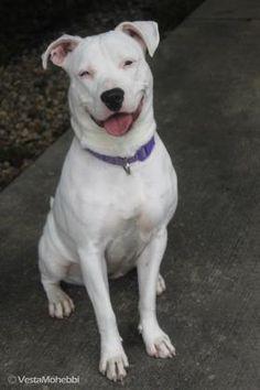 Humane Society of Indianapolis - Dog Profile