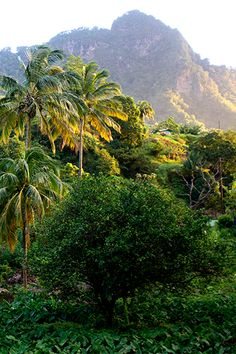 St. Vincent & The Grenadines - Vermont Natural Trail. For the best of art, food, culture, travel, head to theculturetrip.com. Or click http://theculturetrip.com/caribbean/st-vincent/ for everything a traveller needs to know about St Vincent.