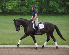 Building Skills for First Level Dressage | Dressage Today
