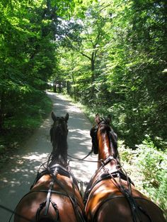 Carriage ride on Mackinac Island! No gas powered engines allowed on island! Bikes and horses only!