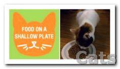 Si su gato se come demasiado r?pido y luego vomita. coloque.