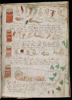 Voynich Manuscript Page 099
