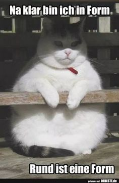 Okaaaay that's lovely fat cat meme, fat cats funny, fat cat humor, fat Fat Humor, Memes Humor, Cat Memes, Funny Jokes, Hilarious, Funny Sayings, Funny Animal Pictures, Funny Images, Funny Photos