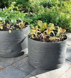 Garden plant containers on pinterest planters plants for Portable vegetable garden