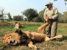 lion reflexogy! Bahaaa