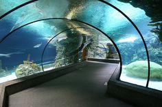 Aquarium tunnel at the Henry Doorly Zoo - Omaha, Nebraska