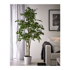 """FEJKA Artificial potted plant, bamboo, Height: Diameter of plant pot: 8 ¼"""". FEJKA artificial potted plants that don't require a green thumb. Perfect when you have better things to do than water plants and tidy up dead leaves. Ikea Fake Plants, Large Fake Plants, Artificial Plants And Trees, Fake Trees, Fake Plants Decor, Faux Plants, Cool Plants, Plant Decor, Artificial Flowers"""