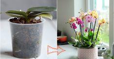 Nekvitne+ti+orchidea?+Vďaka+tomuto+porastie+ako+z+vody!+Vyskúšaj!+-+KAMzaKRASOU.sk Planter Pots, Garden, Home Decor, Fence, Luxury, Beauty, Plants, Growing Up, Garten
