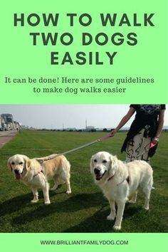 Learn how to walk two or more dogs with ease and comfort. Enjoyable dog walks are back on the agenda again! via @KaufmannsPuppy #dogtipsandtricks
