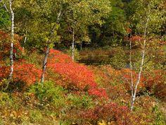 [2012.8.8] 울창한 숲 X10    풀과 나무로 빽빽한 숲의 모습을 담은 사진입니다.    숲은 쉴새없이 오염된걸 정화하여 새 것으로 내 놓는데요.    그래서 우리의 마음도 숲을 보면 깨끗해지나 봅니다.    <사진정보>    촬영 모드 - Manual   감도 - ISO 100   다이나믹 레인지 - 100%   조리개 - f/5.6   셔터스피드 - 1/320   초점거리 - 18.7mm   화이트 밸런스 - Fine   필름 시뮬레이션 - Velvia    http://blog.naver.com/fujifilm_x/150136728674