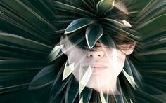 Beauty-Trend - Kaktusöl für die Schönheit