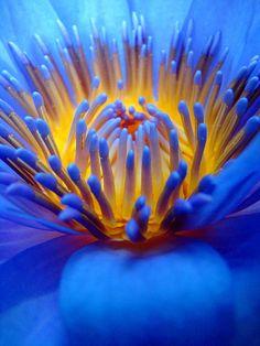 Lotus, by Romain