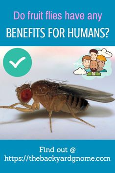 Read our guide to find out more! Fruit Flies, Fly Traps, How To Get Rid, Benefit
