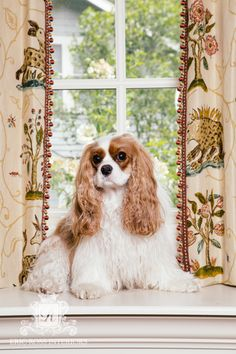 My Formal Portait taken affront of window treatments I designed using F. Schumacher & Co.'s La Menagerie fabric!  #DarbyDoesDesign