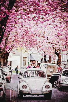 Spring cherry blossoms in bloom above white Volkswagen Beetle Vw Vintage, Jolie Photo, Vw Beetles, Beetle Bug, Pink Beetle, Pretty Pictures, Pretty In Pink, Beautiful Places, Scenery