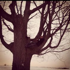 The giving tree...
