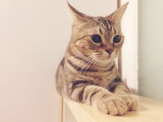 spy the cat.