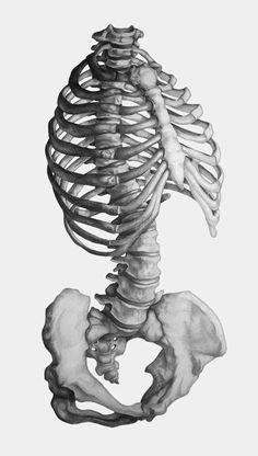 Skeletal Torso Rendering by Katy Wiedemann, via Behance Drawing Skills, Life Drawing, Figure Drawing, Drawing Faces, Drawing Tips, Anatomy Sketches, Art Sketches, Art Drawings, Anatomy Reference